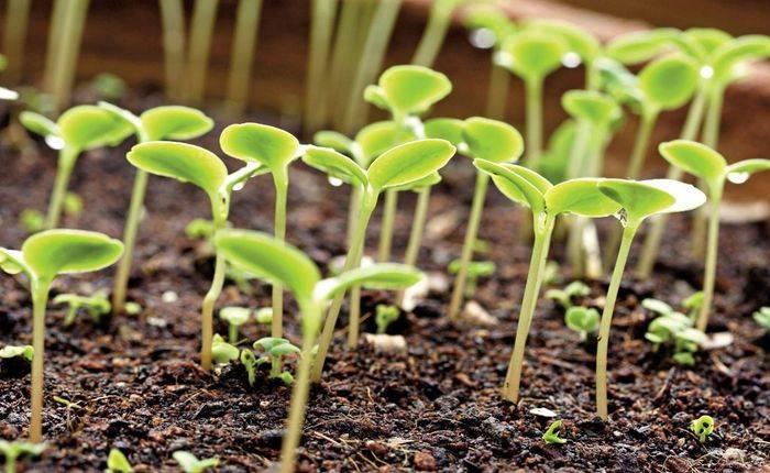 Стратификация семян многолетников – кому сколько нужно