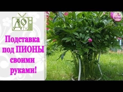 Опоры для растений своими руками – 15 отличных вариантов для сада и огорода