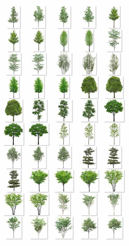 Удивительное знакомство с железным деревом