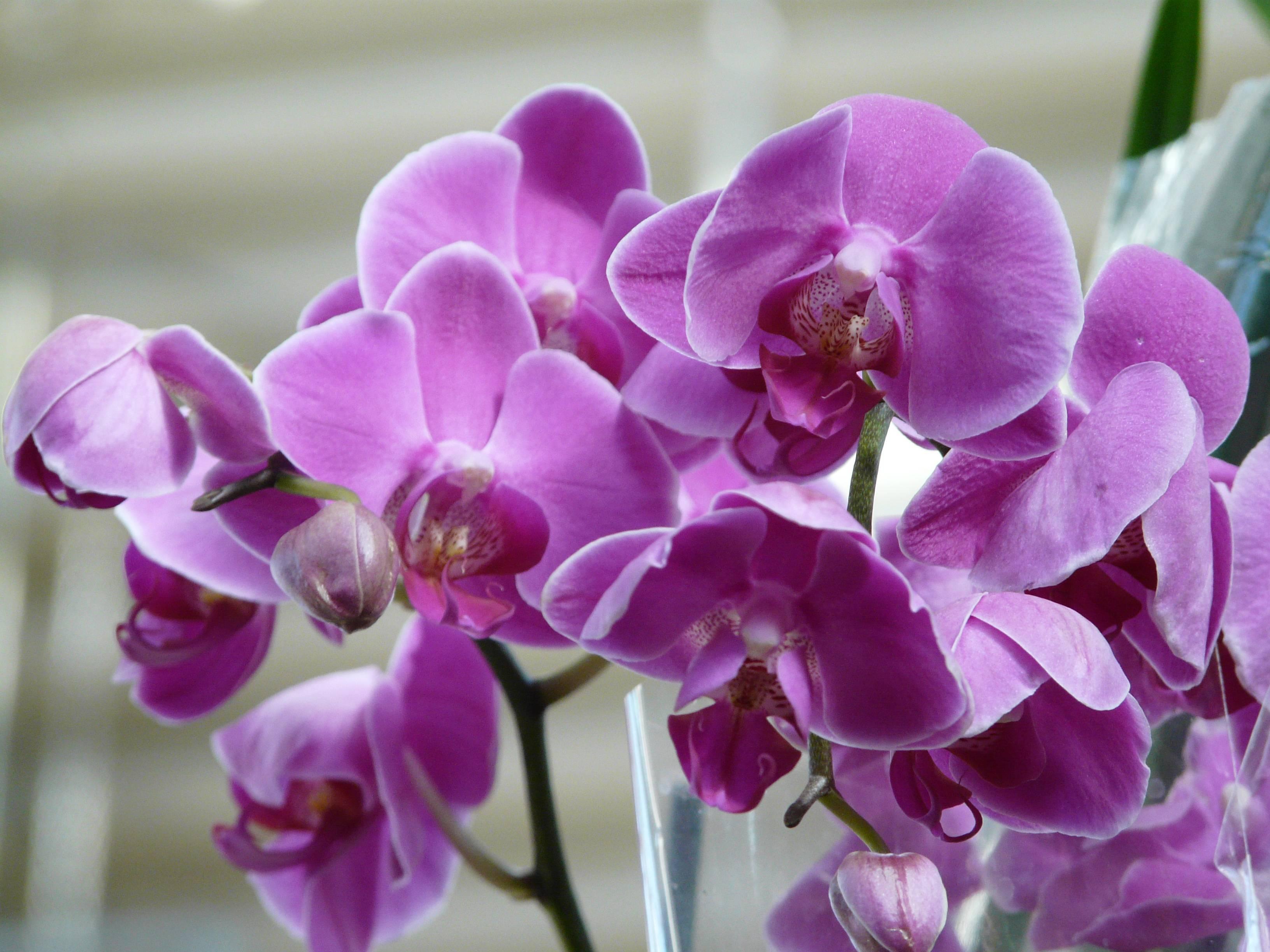 Удобрение для орхидей: подкормка для цветения в домашних условиях