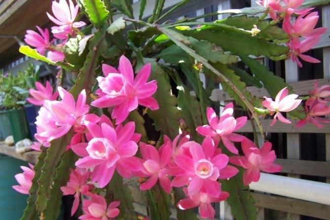 Основные причины, почему не цветут фаленопсисы