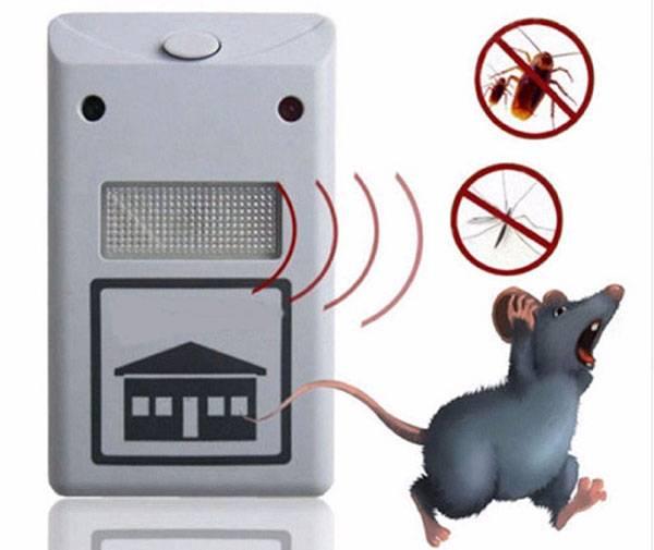 Как избавиться от мышей в дачном доме народными средствами?