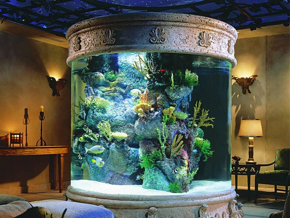 Распылитель воздуха для аквариума: какой лучше выбрать