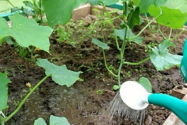 Удобрения для газона: чем подкормить газон весной, летом и осенью