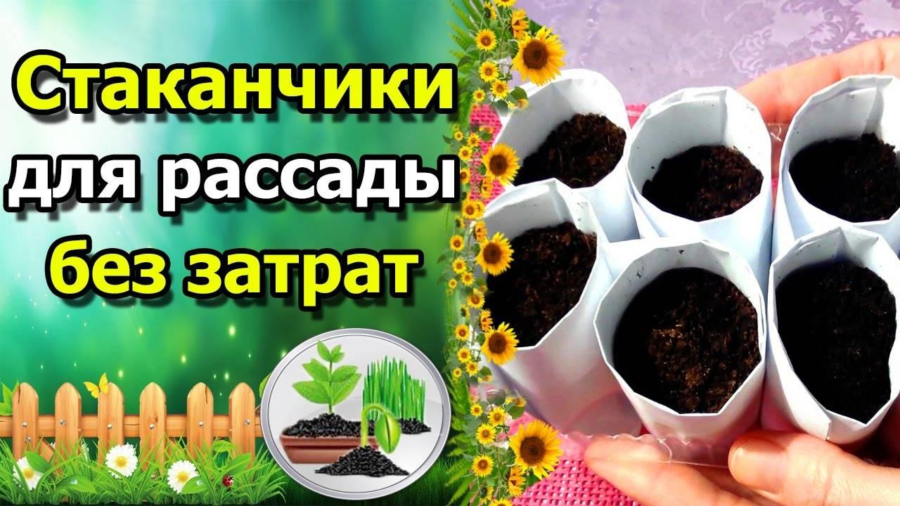 Стаканчики для рассады цветов из газеты — видео