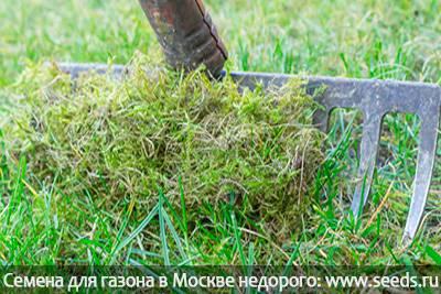 У меня мох на газоне — как бороться?