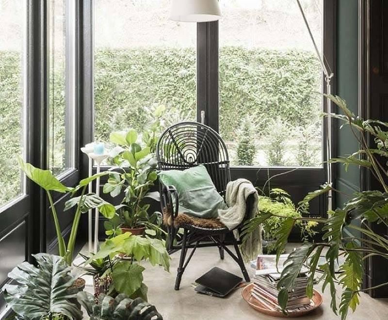 Фиттония уход в домашних условиях