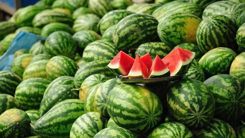 Как вырастить арбузы