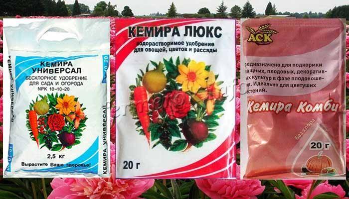 Подкормка пионов: схемы внесения удобрений в зависимости от сезона и признаки нехватки питательных веществ