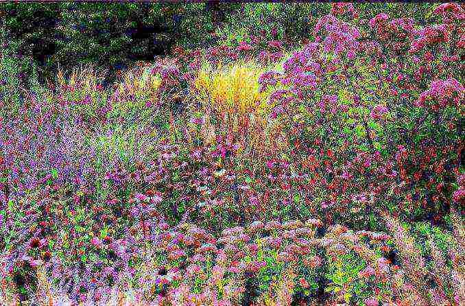 Топинамбур выращивание