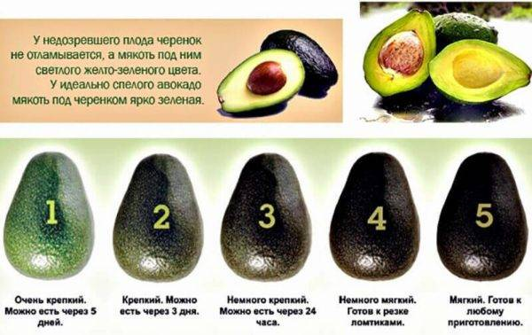 Как и с чем сочетается авокадо: 9 самых полезных и вкусных салатов. авокадо тот еще фрукт!