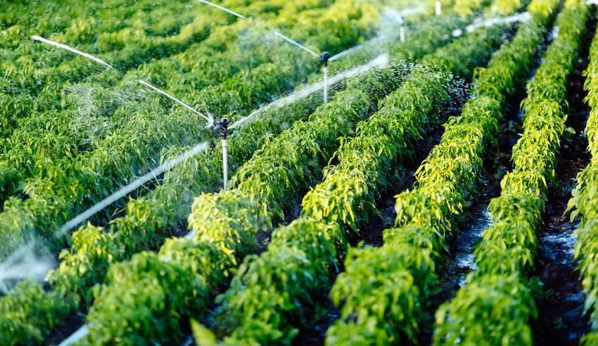 Как сделать полив: варианты системы полива
