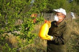 Борьба с тлей народными средствами. 16 народных средства против тли на садовом участке.
