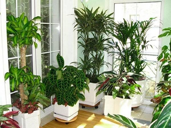 Отвечаем, можно ли орхидеи держать в спальне