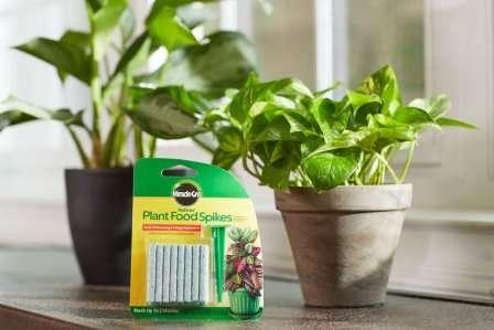 Как использовать яичную скорлупу в качестве подкормки для растений?