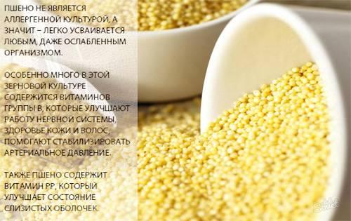 Пшеничная каша — польза и вред