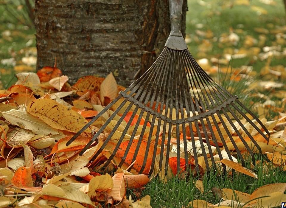 Работы на дачном участке в октябре: обработка сада