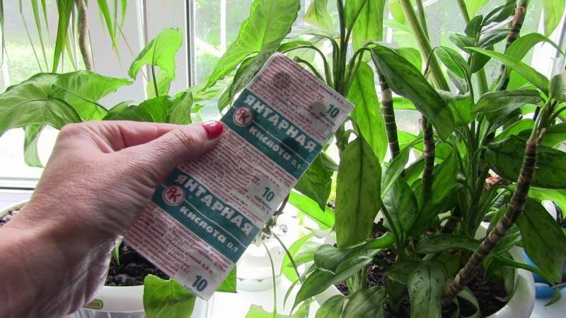 Узнайте, как применять янтарную кислоту для орхидей