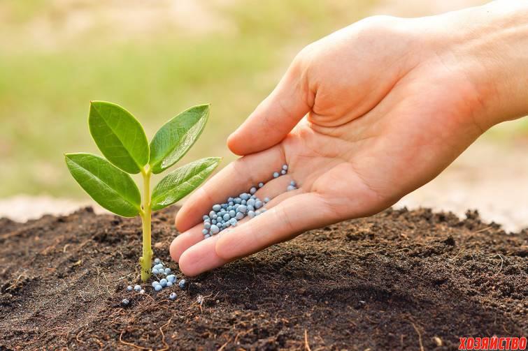 Удобрение азофоска: рекомендации по применению