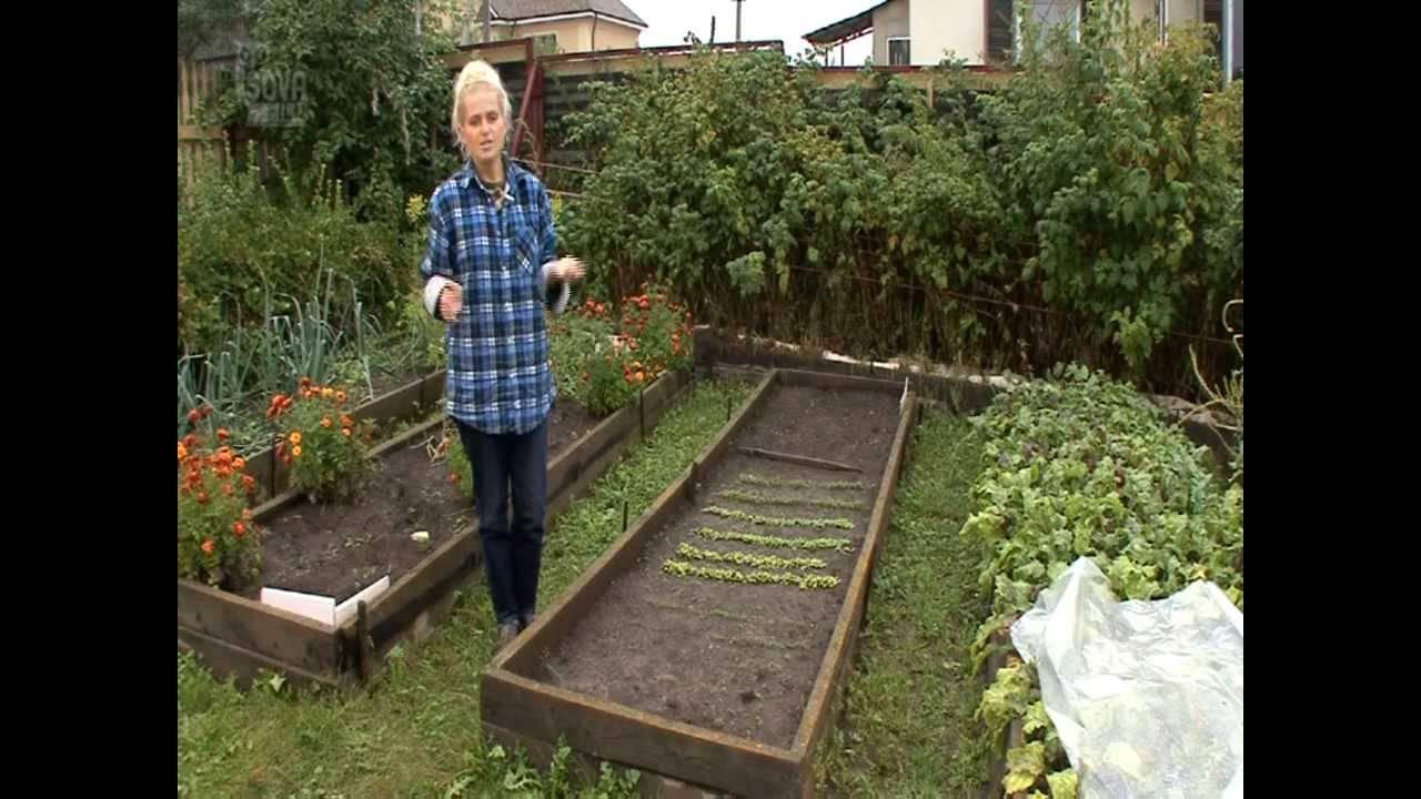 Какие удобрения лучше использовать для моркови