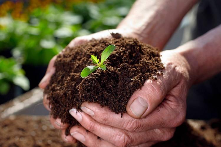 Изготовление плодородной смеси с использованием торфа. торф как удобрение – как применять в огороде, саду, теплице торф применяется