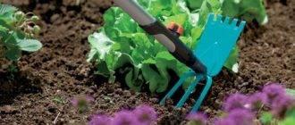 Ленивый огород без особых хлопот вас прокормит целый год