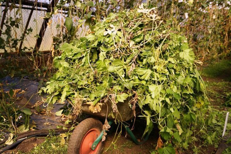 «кормим» рассаду, или что класть в лунку при посадке помидор