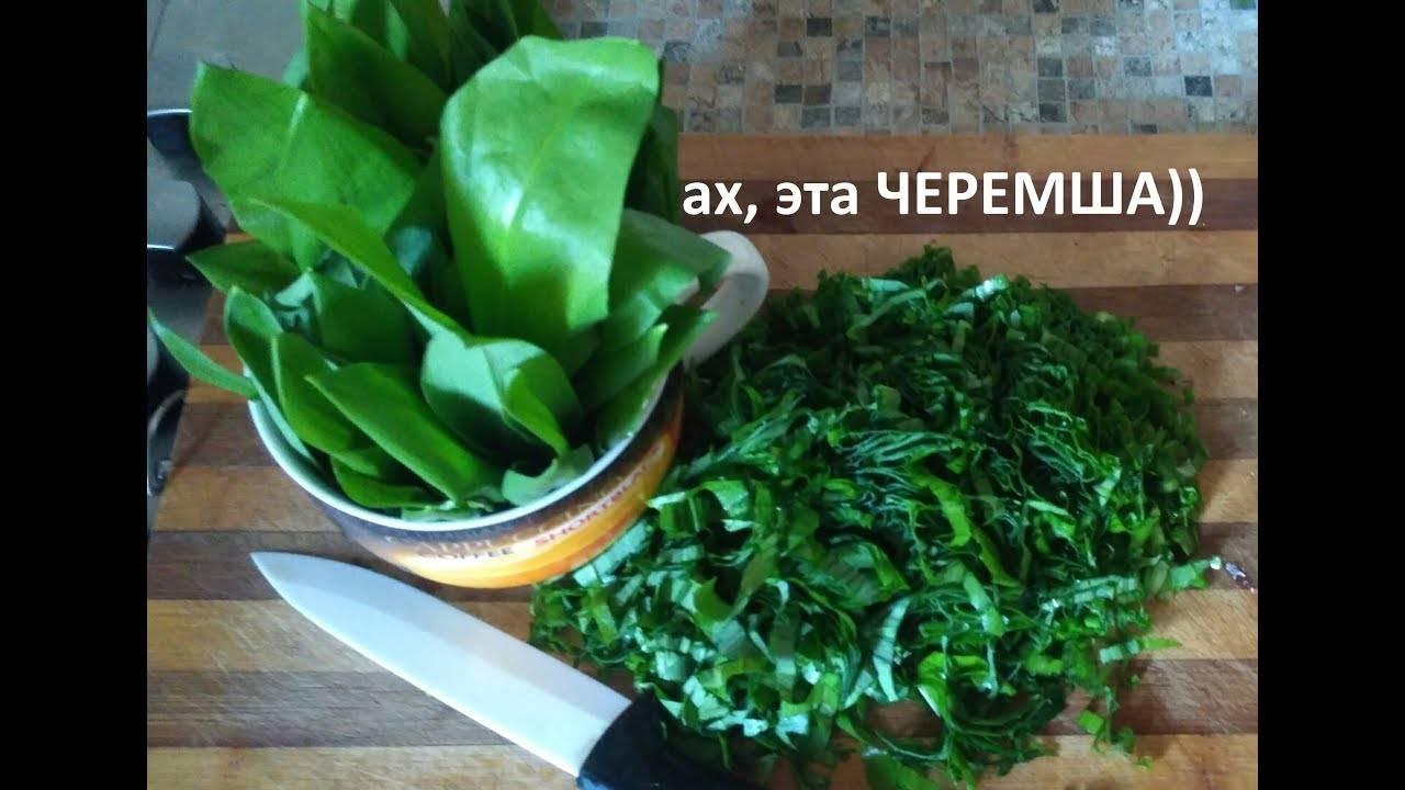 Выращивание черемши: посадка, размножение, полезные свойства, уход