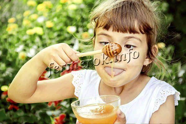 Рапсовый мед: польза и вред, недостатки и достоинства