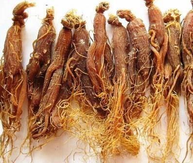 Полезные свойства необычного корня женьшеня
