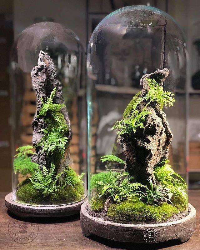 Бонсай своими руками в саду: как вырастить и ухаживать за красотой в миниатюре