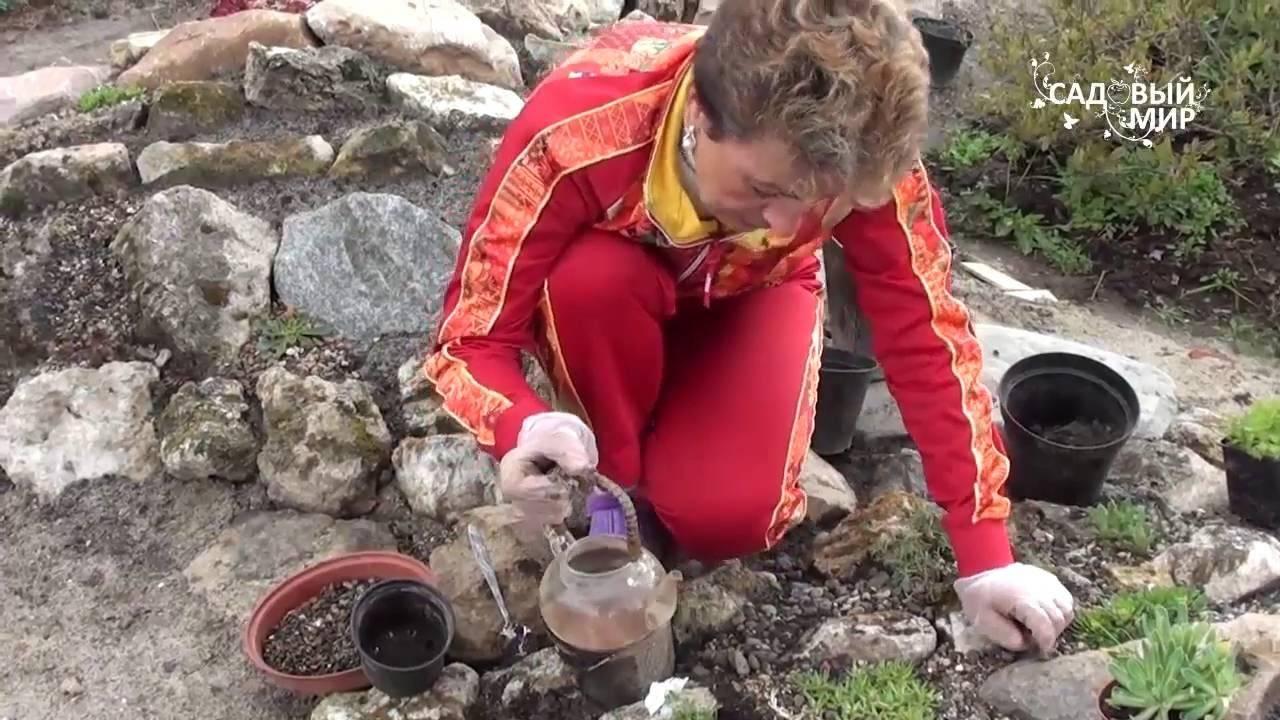 Как сделать альпийскую горку своими руками
