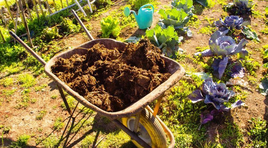 Навоз как удобрения для огорода: природное питательное средство