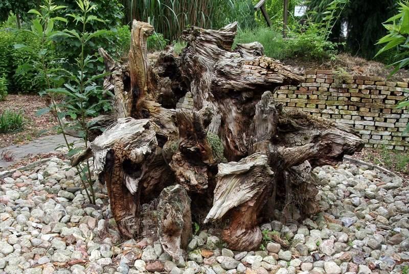 Рутарий - причудливый ландшафтный дизайн. все про рутарий или как сделать сад из старых пней и корней своими руками старые пни и коряги рутарий в саду