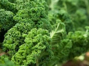 Брокколи из семян — просто, надёжно и необременительно
