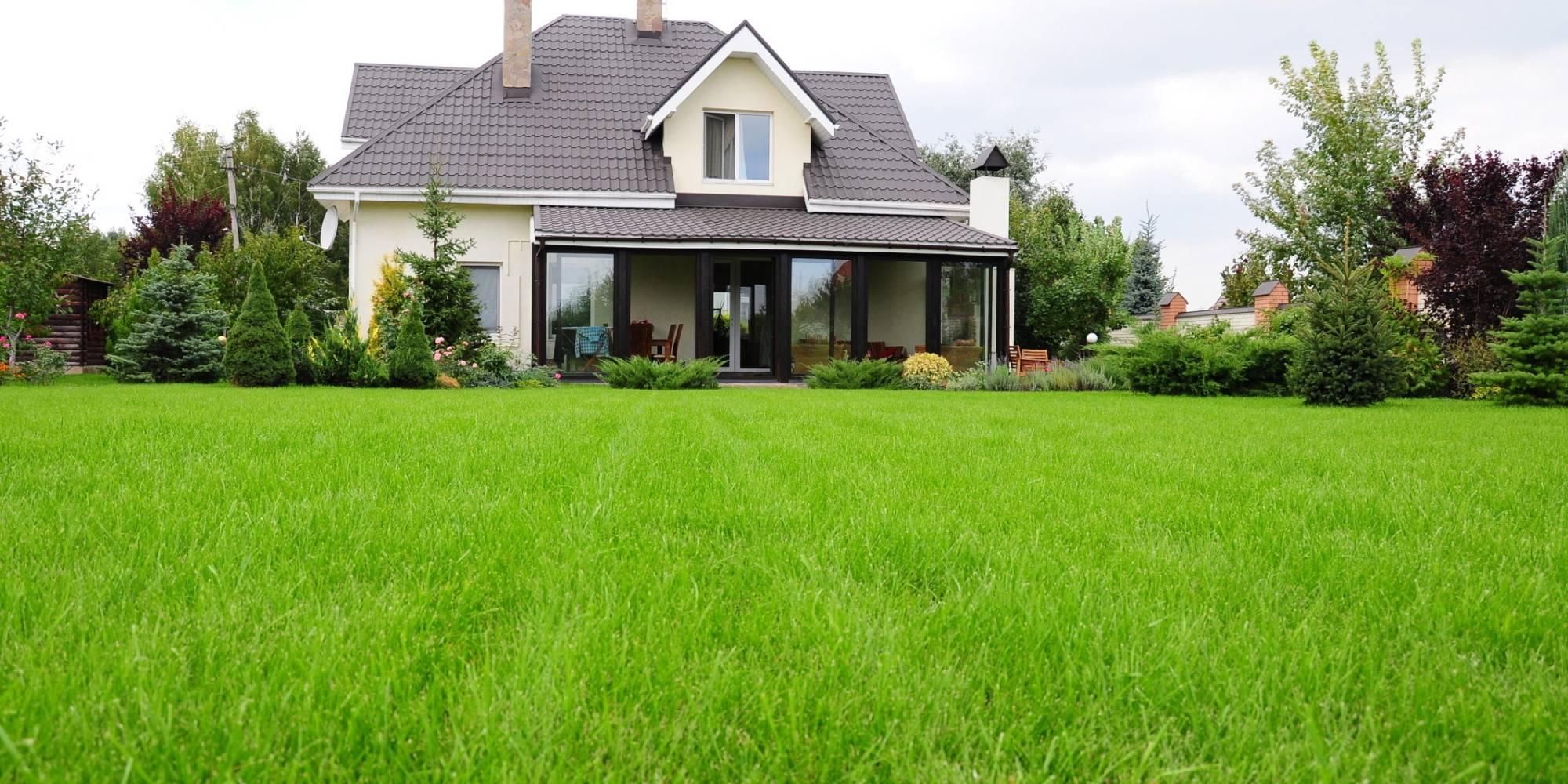 Трава для газона: разновидности и особенности выбора