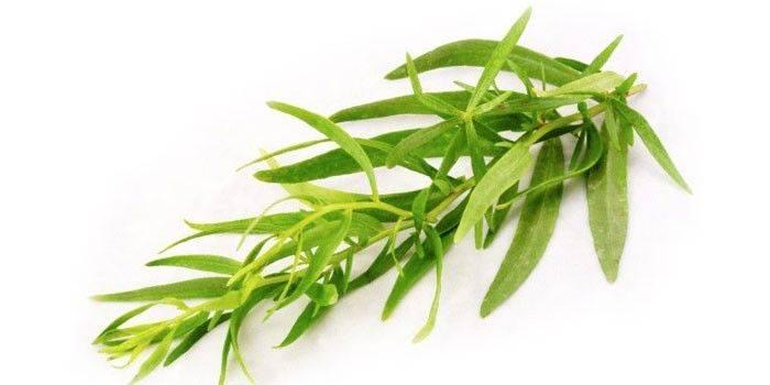 Эстрагон: полезные свойства, применение и выращивание