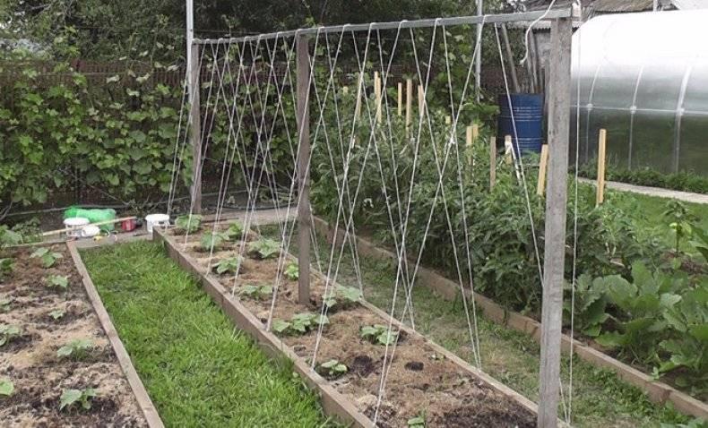 Как выращивать горох в открытом грунте: советы дачникам