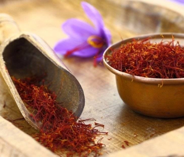 Шафран — полезные свойства и противопоказания, применение настоя, масла