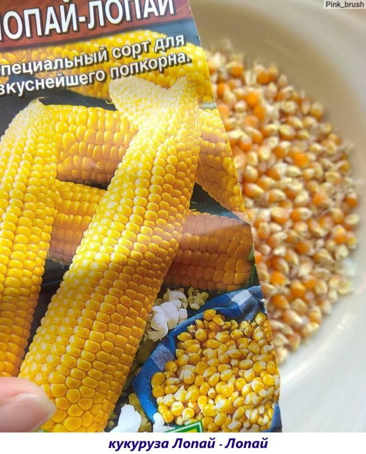 Как сделать попкорн из свежей кукурузы. как можно сделать попкорн из кукурузы: инструкция