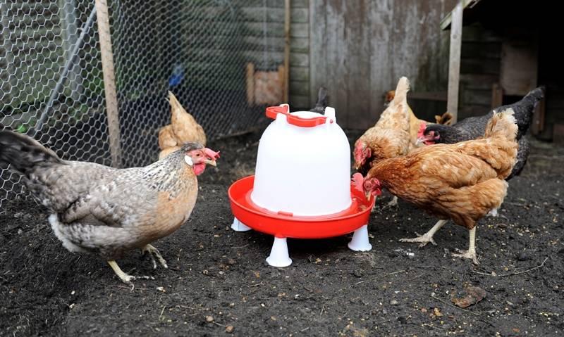 ?соликокс» для цыплят-бройлеров — дозировка, профилактика, инструкция по применению