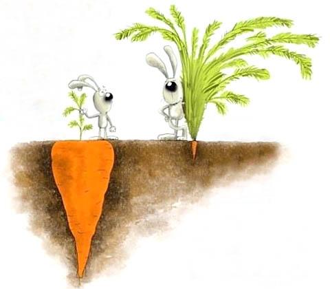 Природные стимуляторы роста растений в домашних условиях