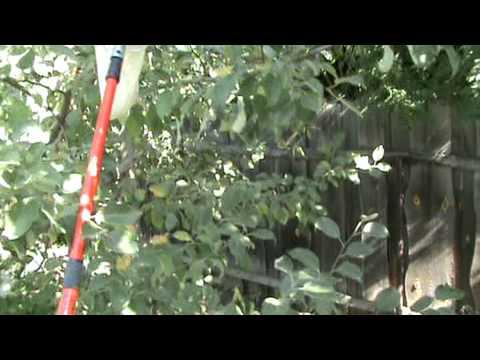 Плодосборник ручной садовый из китая, цена, видео