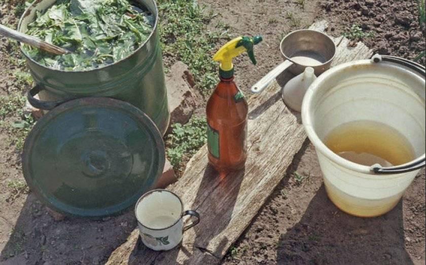 Тля на томатах: признаки поражения и способы борьбы с вредителями