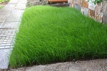 Газонная трава: как выбрать семена, как посадить и как ухаживать. сажаем идеальный газон.