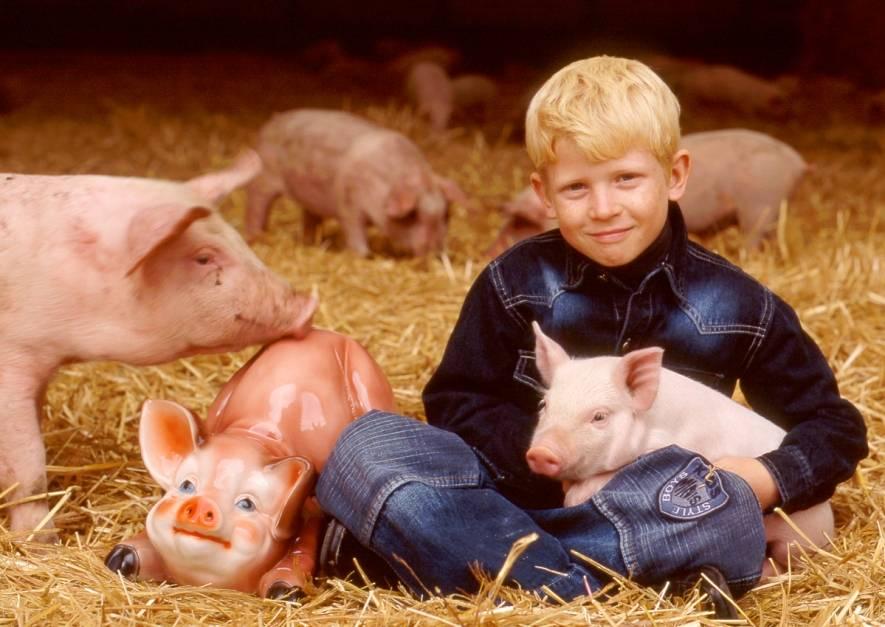 Свиноводство как бизнес. бизнес план и что нужно для свиноводства с нуля?