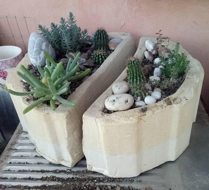 «каменная роза» эхеверия: уход в домашних условиях, полезные рекомендации по выращиванию теплолюбивого растения