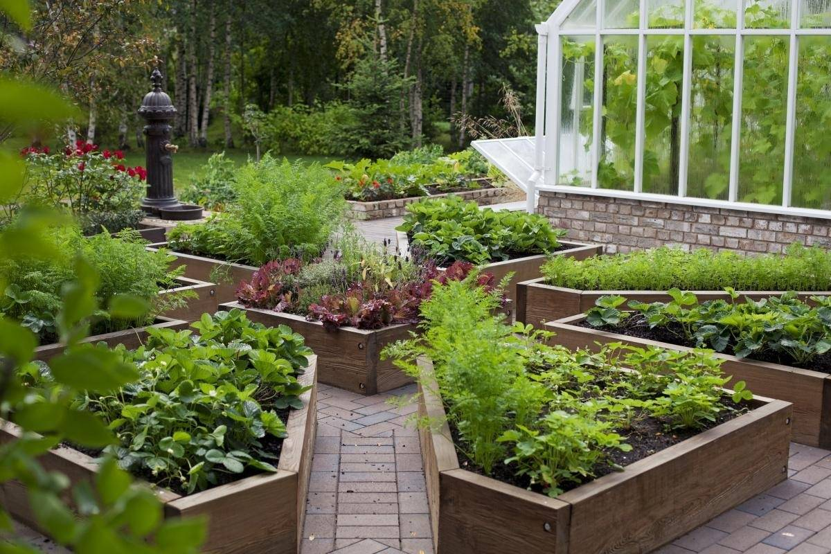 Огород без хлопот для занятых без перекопки и прополки