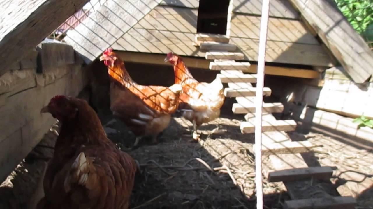 Выбор ограждения для курятника, видео