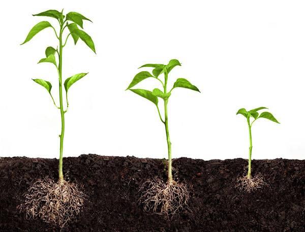 Какие бывают регуляторы роста растений и как их использовать